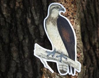 Osprey Vinyl Sticker   Laptop Sticker   Water Bottle Sticker   Bird Sticker   Osprey Lover Gift   Bird Decal   Osprey Decal