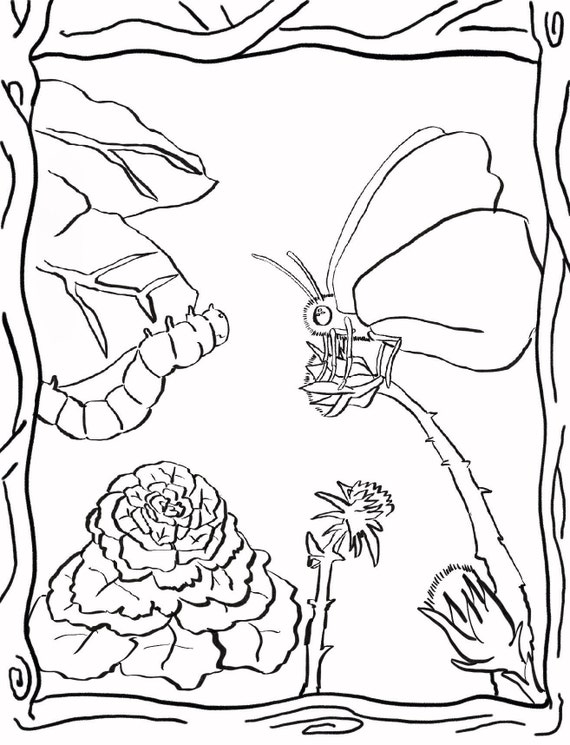 Parables From Nature Coloring Book Etsy
