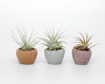 Concrete Geometric Tiny Round Holder with Air Plant / Air Plant / Ring Holder