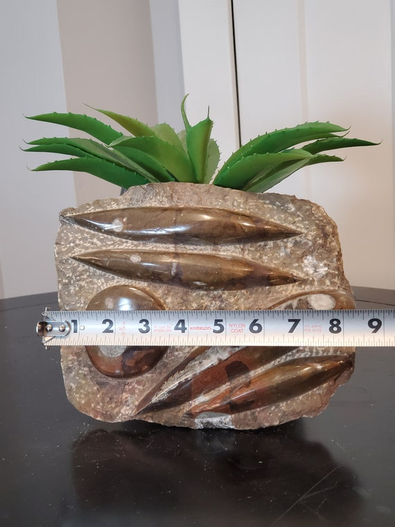 Metal Display Stand INCLUDED Specimen Metaphysical Healing Home Decor Large 4 Orthoceras /& Ammonite Fossil Brown Slab Plate 8.5 x 7.5