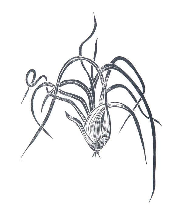 Limited Edition Lino Print 'Airplant'. Houseplant, Interiors