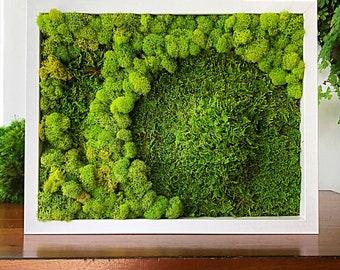 Moss wall art. Botanical art. Living wall garden.  Moss art