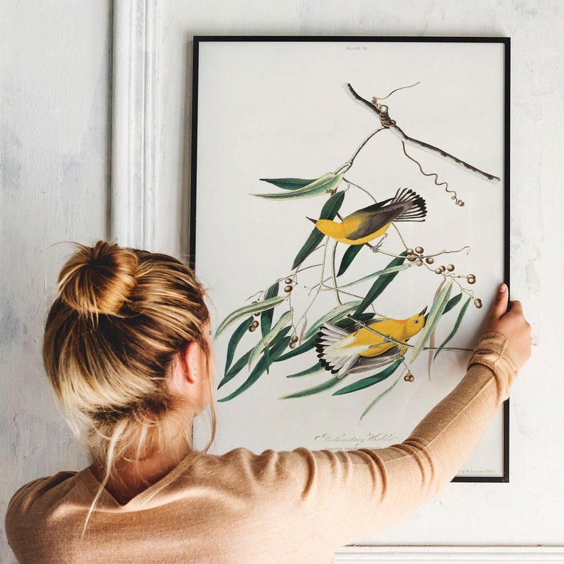 COO354 bird poster print Antique Bird Painting Vintage Drawing Poster Wall Art Decor antique bird Prothonotary Warbler Print