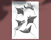 Wild Dance Limited Edition numbered and signed 30x40cm Poster Poster Raies Mantas