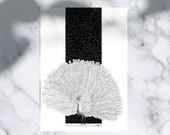 Elegance Limited Edition numbered and signed 30x40cm Peacock Poster Peacock Illustration Peacock Decoration Magic Decoration