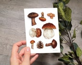 MUSHROOMS | drawing | card | A6 | art print | greeting card | notecard | with envelope