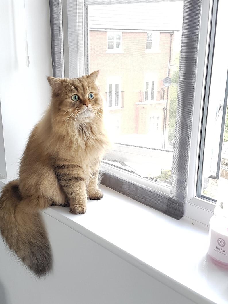 Custom Flat Cats Window Screens  Mesh Window Protection for image 0