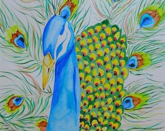Peacock Watercolor Print