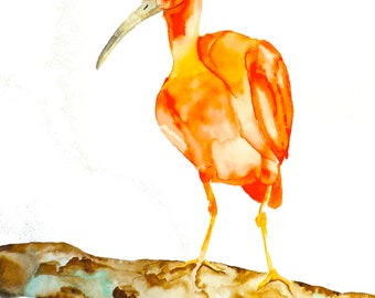 Pink Tropical Bird Watercolor Print
