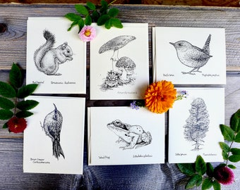 Forest Life Notecards, Nature Cards, Nature Notecards, Alaskan Animals, Alaskan Plants, Forest Card Set, Rainforest Cards, Alaskan Nature