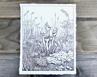 Lichen Print, Kim McNett, Forest Art, Rainforest Drawing, Botanical Illustration, Lichen Drawing, Scientific Illustration, Nature Art
