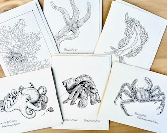 Ocean Life Notecards, Kim McNett, Marine Life Cards, Ocean Animals, Alaskan Sea Life, Sea Life Art, Tidepool,
