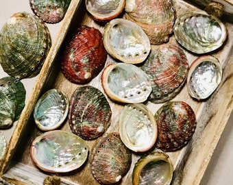 Abalone Smudging Shell, Small, 2-3 inches