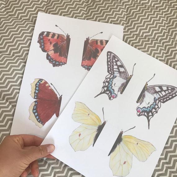 Butterflies Schmetterling Vorlage Schmetterling