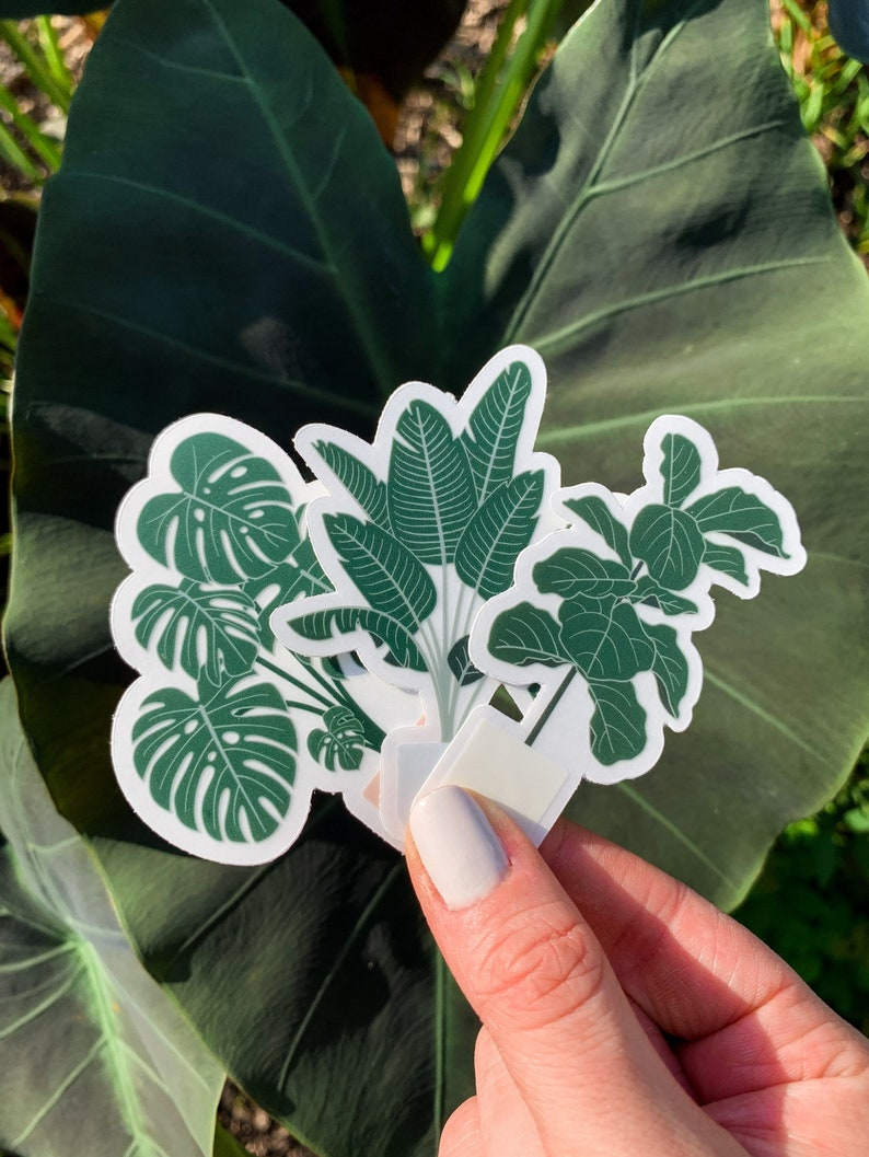 Plant Trees Unique Clear Die Cut Stickers  Birds of Paradise All 3 Trees