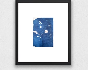 cyanotype with various plants