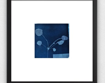 seedling cyanotype, beautiful original artwork for your home or office
