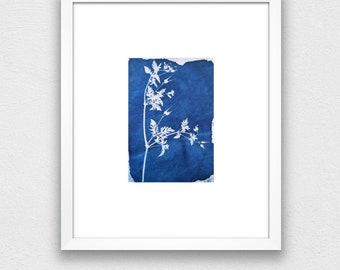 cyanotype plant and flowers, original