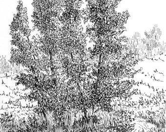 Original Drawing Nature Wall Art, Path Around the Trees, Pen Ink, Vertical 7 X 5