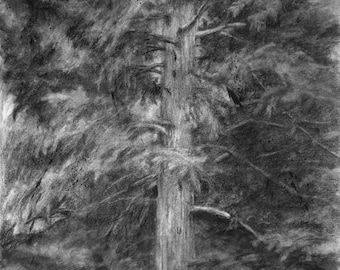 Original Drawing Wall Art, Nature Landscape, Evergreen Interior, Charcoal Black and White, Vertical 16 X 12