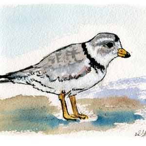 Blank Cards Piping Plover