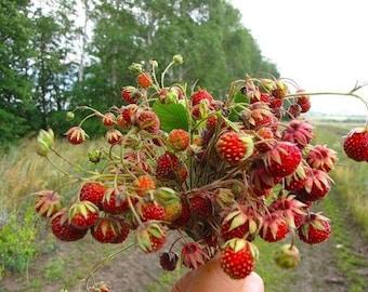 Very big Raspberry Maroseika 15 fresh seeds.
