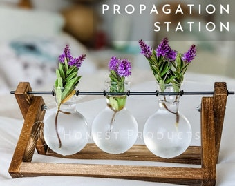 Modern Triple Balls Desk Vase | Hydroponics Plant Glass | Terrarium Vase Container | Planter Pot with Wooden Stand | 9 VARIATIONS