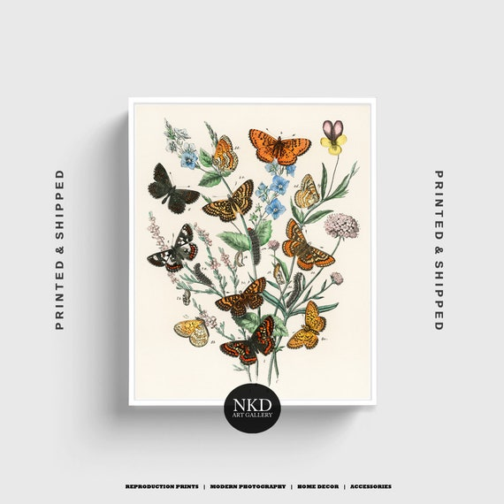 Butterfly Print No 2 European Butterflies And Moths Etsy