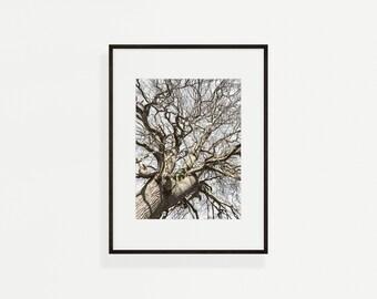 Oak tree, fine art photograph, Spring, wall art, Forest landscape, nature