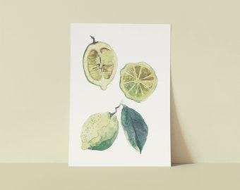 Amalfi Lemons   Watercolor   Art printing   Fine Art Print