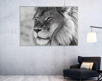 Lion Wall Decor, Print on Plexiglass, Black and White photography, Oversized Art, Large Art, Acrylic Print