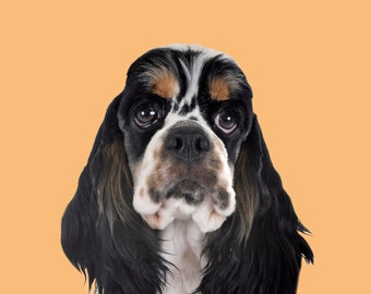 Pet Portraits Canvas, Printed from Photo onto Canvas. Stretched Canvas. Ready to Hang