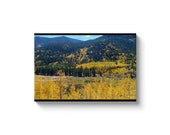 Aerial Aspen Trees And Mountain Creek Marsh In Colorado Canvas Wrap