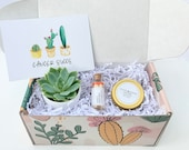 Cancer Succs - Succulent Gift Box - Cancer Sucks - Cheer Up Care Package - Sunshine Gift Box - Surgery Gift - Hospital Gift - Sympathy