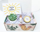 Sending You Sunshine Succulent Gift Box - Live Succulent Gift - Friendship Gift - Thinking of You Gift - Send a Gift - Care Package Set