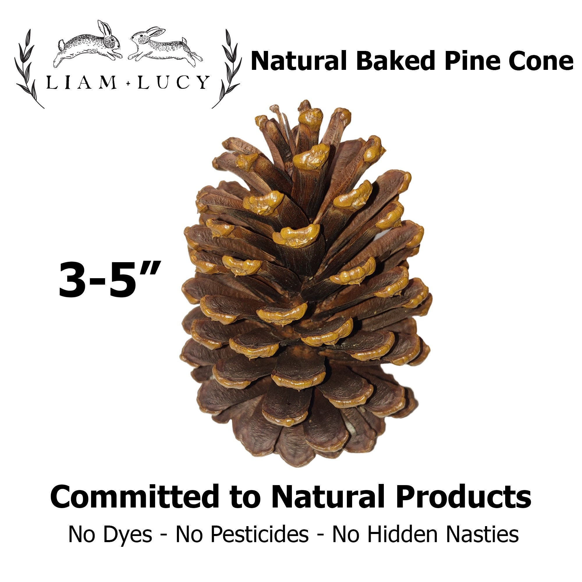 20 Natural JUMBO Baked Pine Cones for Rabbits and Small Animals. Rabbit Toy.  Bunny Toy. Chew Toy. Bunny Rabbit. Chinchilla.