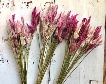 DRIED Plume CELOSIA bundle, Mixed color with fushia