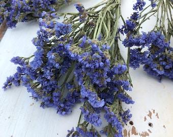 Dried Blue Statice Flower