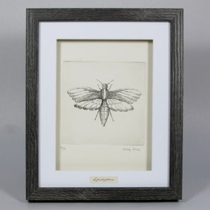 Limited Edition signed print Framed Caterpillar Etching