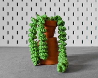 Crochet Trailing Plant - Pig's Tail Succulent - Handmade