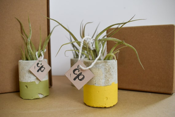 Air/Oxygen Tillandsia Plant - Medusa - Handmade Concrete Pot - Dipped Yellow