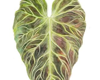 "Philodendron Verrucosum Watecolor Print, 9x12"""