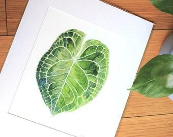 Anthurium Watercolor Print
