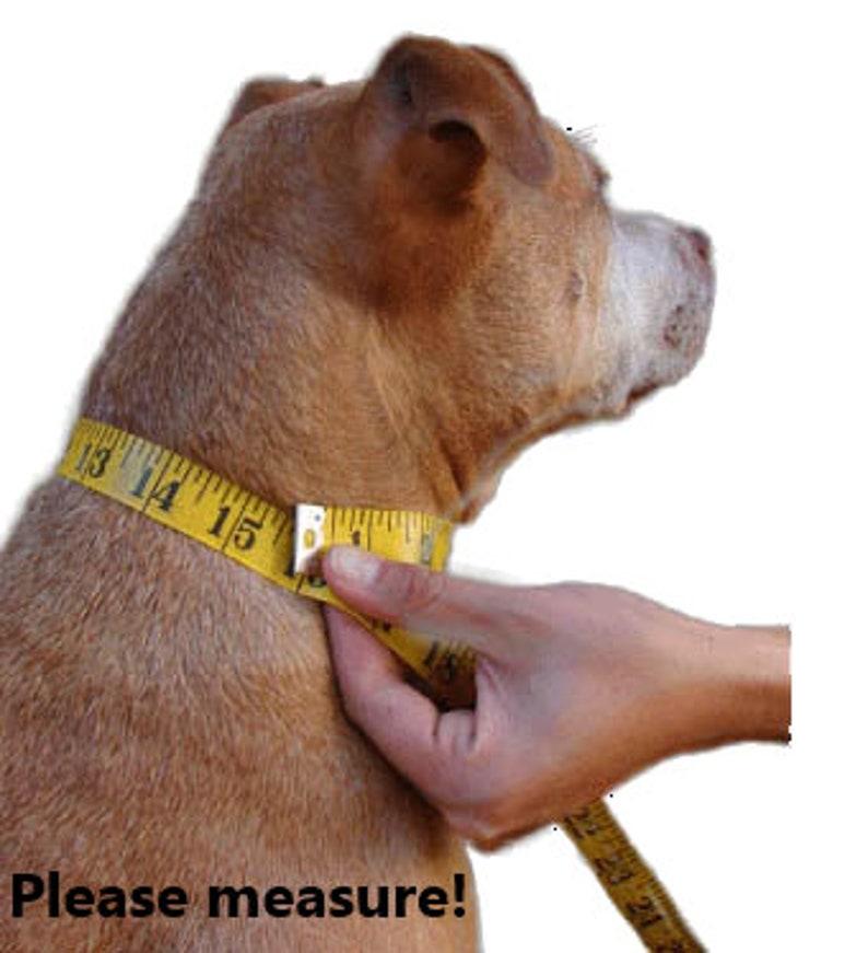 reversible dog bandana with hook and loop fastener Pit Bull Selfie Dog Bandana Pit Bull Dog Bandana