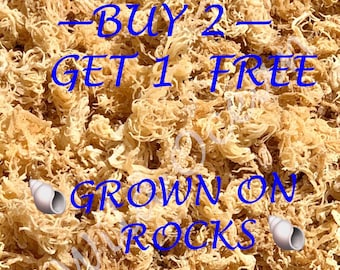 Sea Moss WILDCRAFTED St Lucia Pride Sea Moss BUY 2 Get 1 FREE 100% Real Seamoss