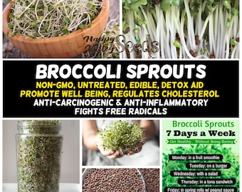 30g  Broccoli Healthy Non GMO Seeds for Sprouting Sprouter Beetroot Cress Kale