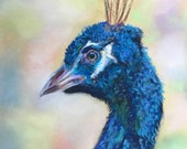 Top quality giclee print of 'Proud Peacock' a bird painting by artist Janet Bird