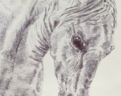 Top quality giclee print of 'White Horse' an equine painting by artist Janet Bird