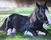 Top quality giclee print of 'Caesar' a  Shire horse painting by artist Janet Bird