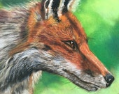 Top quality giclee print of 'Intent' a fox painting by artist Janet Bird